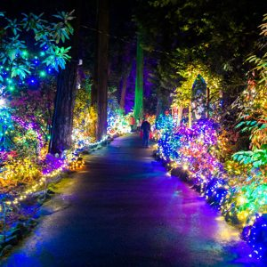 the grotto festival of lights